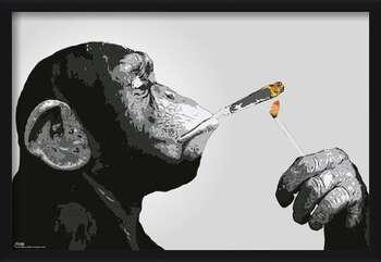 Gerahmte Poster Steez - Monkey Smoking